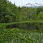 牛留池とミツガシワ