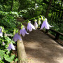 一ノ瀬園地 夏の女小屋の森