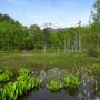 一ノ瀬園地 どじょう池と乗鞍岳
