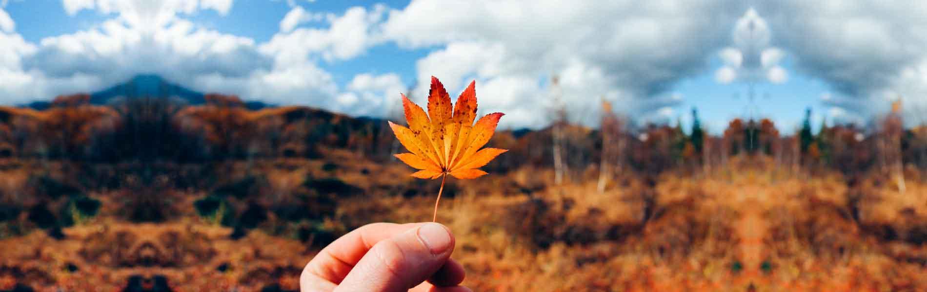 高原の紅葉 / Norikura Kogen Fall Colors